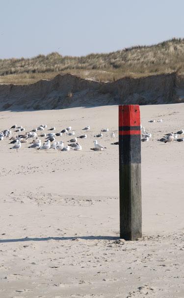 meeuwen-strand